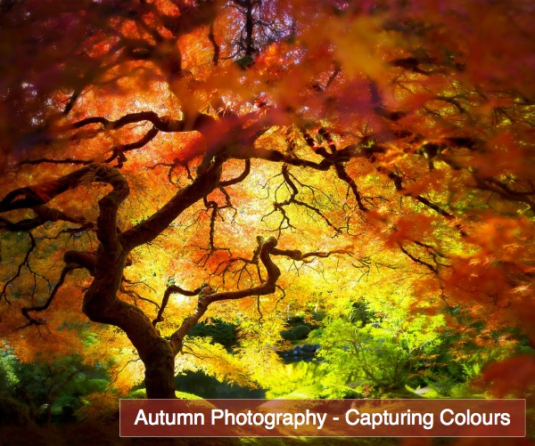 Autumn Fall Photography Capturing Colours