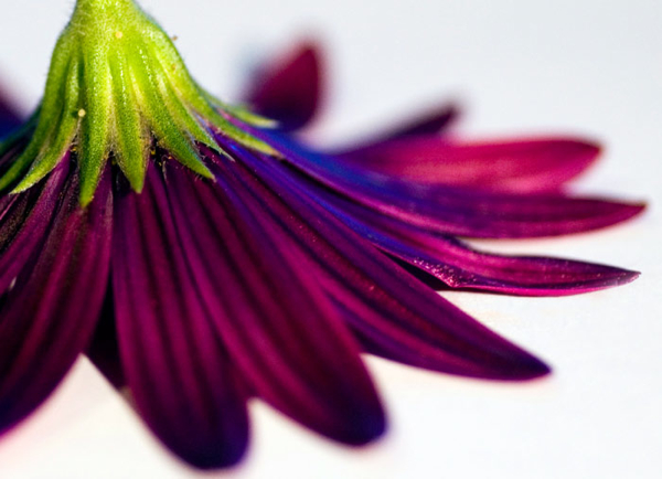 splendor - solis - Photoblog of a the Week