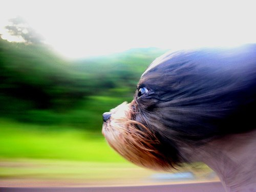 15 Stunning Images Using Blur To Portray Movement