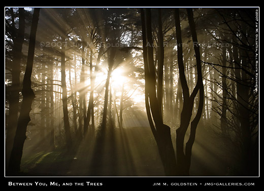 Between You Me and the Trees photo by Jim M. Goldstein