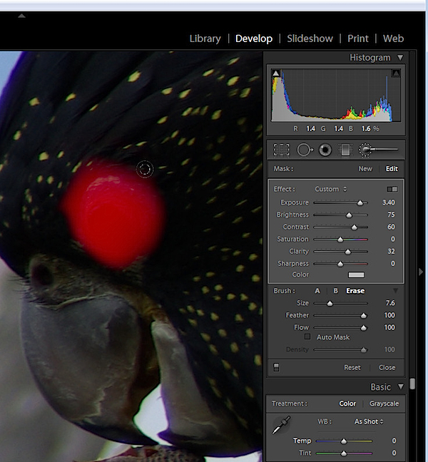 animal-eyes-fix-lightroom-step3.jpg