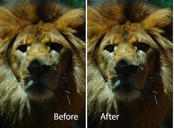 lion-before-after.jpg