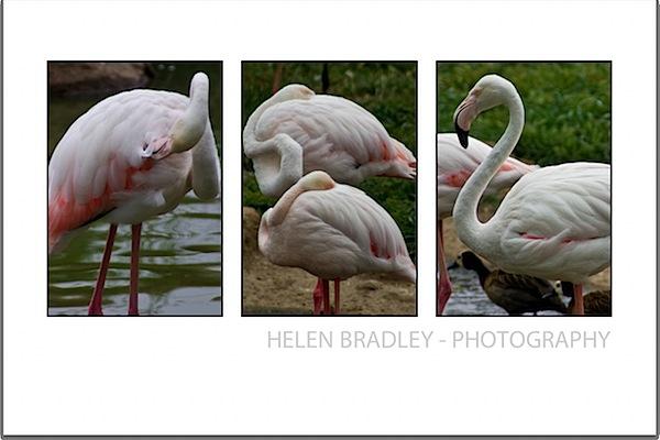 triptych-bird_moreinteresting.jpg
