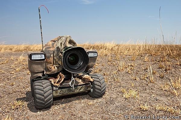 beetlecam-6.jpg