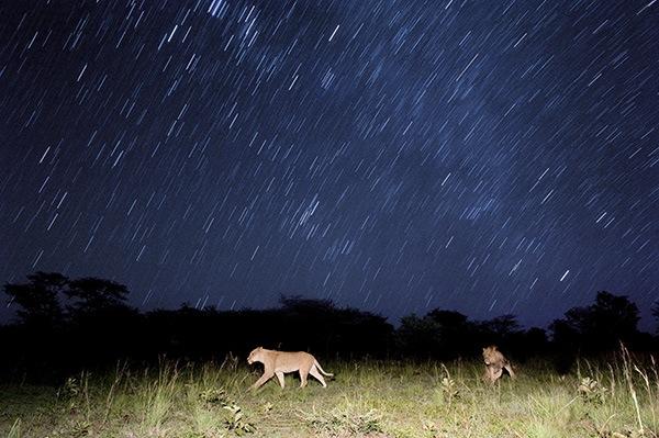 chris-weston-wildlife-photographer.jpg