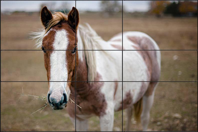 horseExample