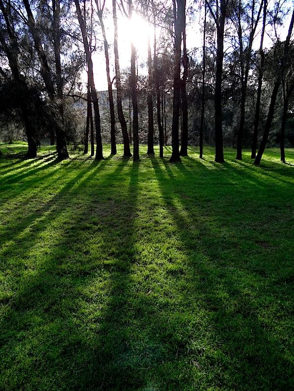 Narrabeen backlit trees 3.JPG