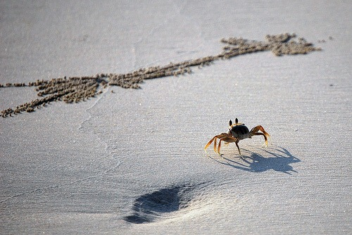 Walk Like a Crab