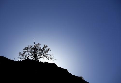 daytime_silhouette.jpg