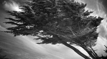 thelasttree