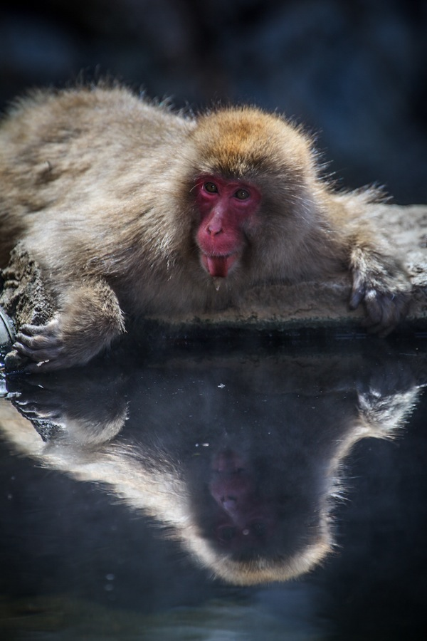 8_Yudunaka Snow Monkey.jpg