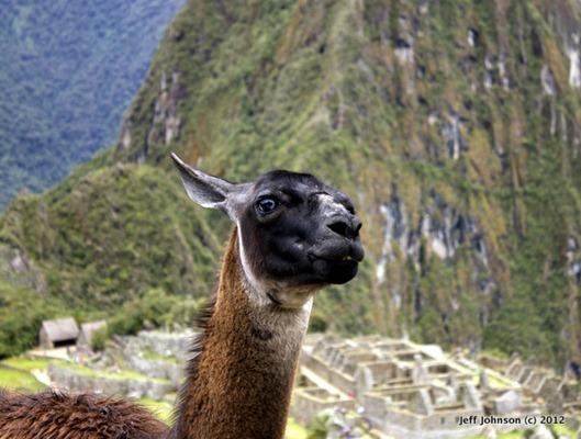 posing_llama