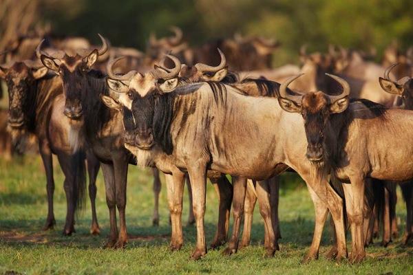Wildlife Variety 2