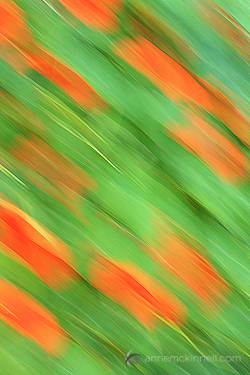 Flower blur using the intentional camera movement technique.