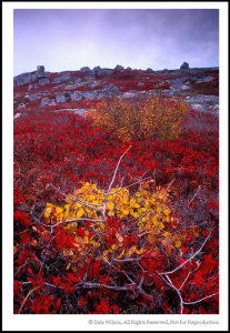 This autumn scene near Peggy's Cove, Nova Scotia is not overly exciting but provides a good example of colour theory in practise. If you cover the bottom half of the picture you are left with a secondary coloured orange foliaged tree and violet coloured sky, and the scene completely lacks any attention grabbing detail. Next cover the top half of the image; although the bottom half of the scene, although much less interesting than the picture as a whole, has far more impact due to the primary colour of yellow being surrounded by the primary colour of red and thus supporting the point of Matisse as quoted at the opening.