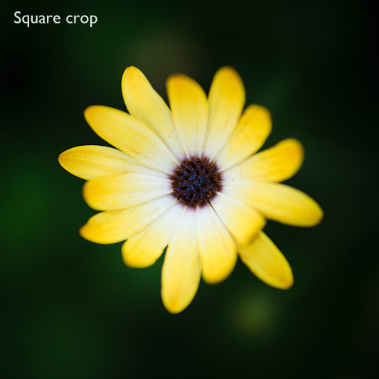 Square format photography