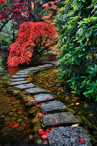 Japanese Garden by Anne McKinnell