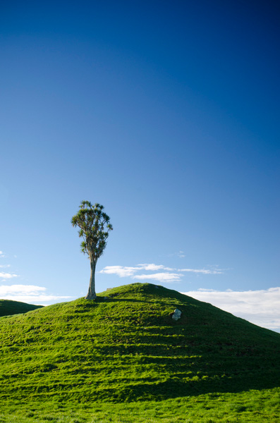 Lone cabbage tree, Taranaki New Zealand.  Nikon D7000, Nikkor 16-85mm DX, Marumi Polarizer. 35 mm, f/11, 1/20h, ISO100.  I think that vertical images often look great with plenty of empty real estate (I am a gleeful recidivist breaker of the rule of thirds). This image has sold several times as an interior page with text dropped over the sky portion.