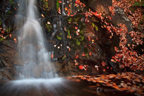 Fallingwater Cascades, Virginia, by Anne McKinnell