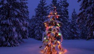 winter-wonderland-holiday-photo-tree-14a.jpg
