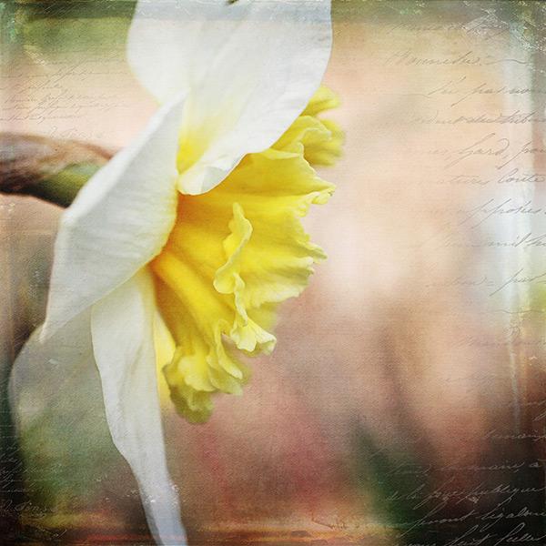Textured-yellow-flower-600