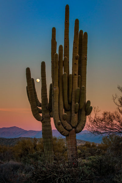 There was no real foreground to speak of here. Just a lot of sand and some uninteresting brush.  What I did see was the way the moon was rising between the arms of the saguaro, and the soft gradation from orange to blue as the sun set behind me.  Taken with EOS 5D Mark III, EF 70-200 f/2.8L IS II, 1/20 @ f/22, ISO 1000.