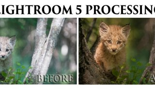 Lightroom5-processing