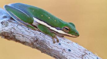wildlife-frog