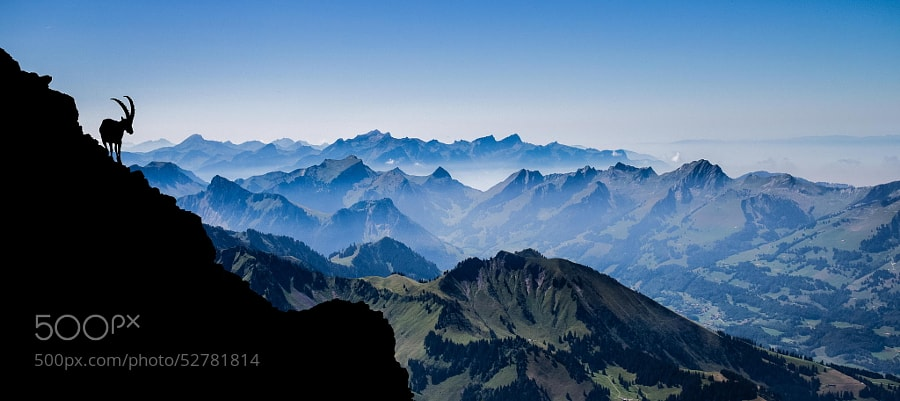 Photograph Shadow of the Ibex by Gilles Baechler on 500px