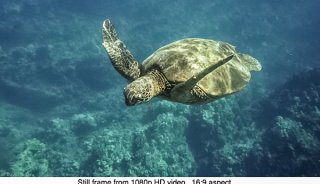 DJulian-Sea-Turtle-Makena-Maui-Video-Still.jpg
