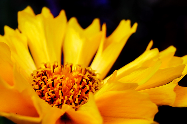 Colorflowersmall