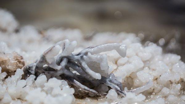 dead-sea-salt-kinetis