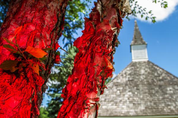 Steeple redtree 600
