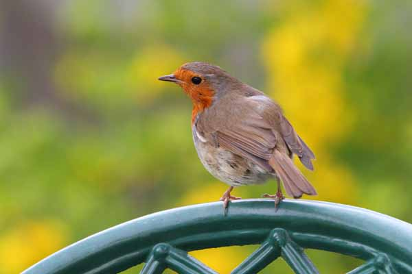 002 Robin on Chair