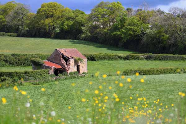 009 Old Barn in Fields