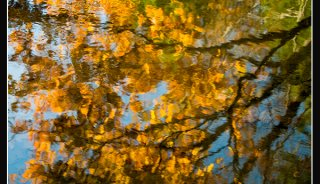 Abstract pics_0000_fall colors
