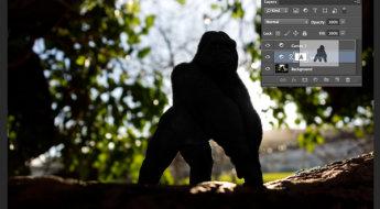 Gorilla-duplicating-masks-on-other-adjustment-layers.jpg