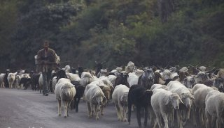 Photographing-From-The-Hip_Sheep-Herder-Walking-With-Flock-of-Sheep_By-Memorable-Jaunts.jpg