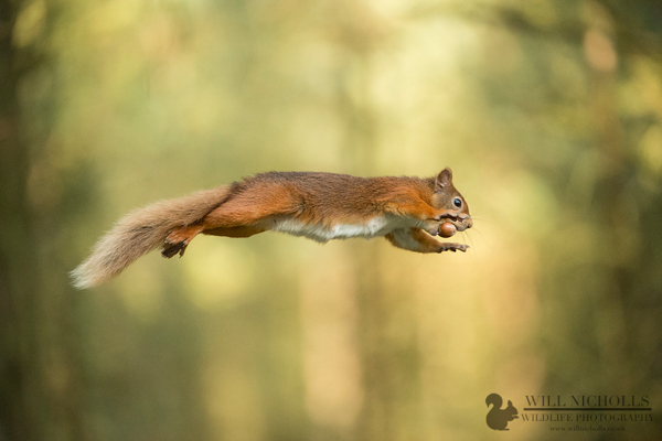 Jumping with nut