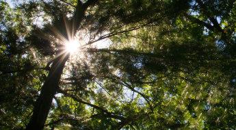 tree-starburst.jpg
