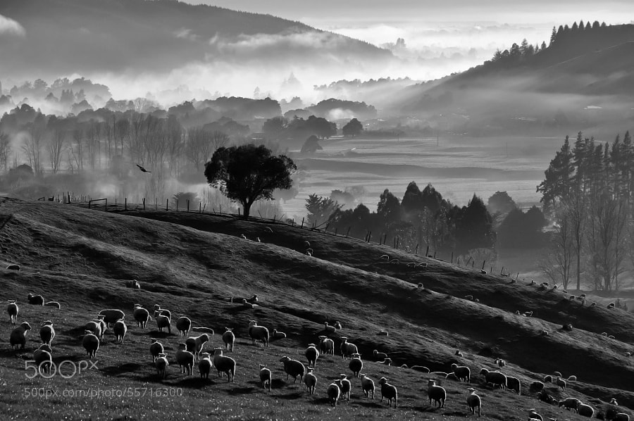 Photograph A rural morning by Margareta   on 500px