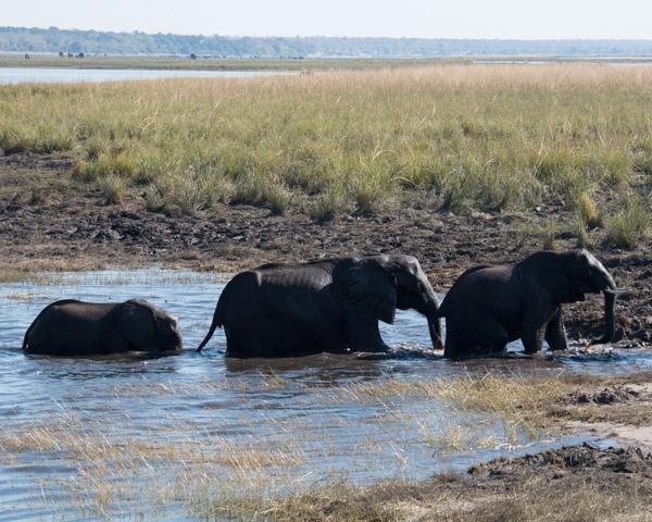 DSC 1177 elephant group