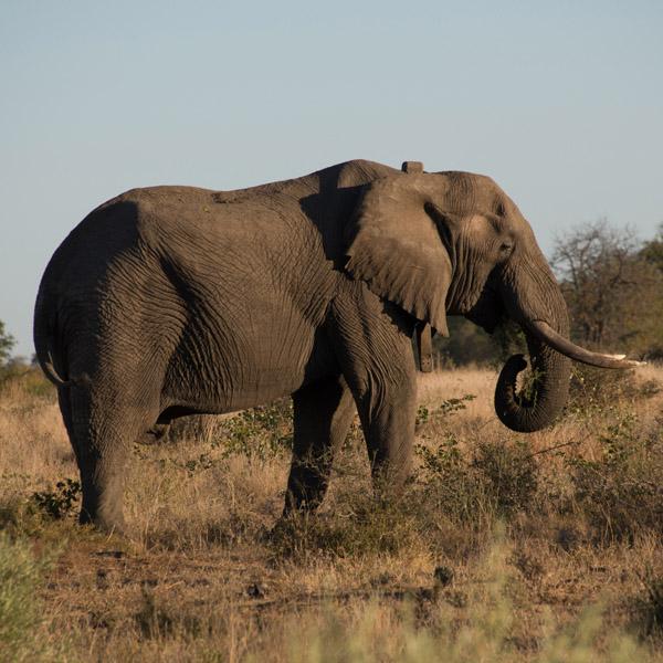 DSC 7849 elephant afternoon