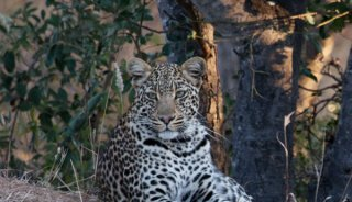 DSC_7895-leopard-camo.jpg