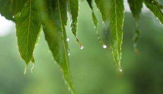 leaves-rain.jpg