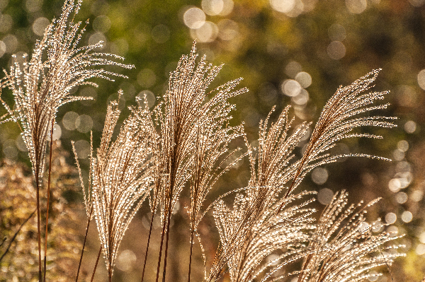 Bokeh in this image caused by the distance from the subject to the background which fell well beyond the DOF