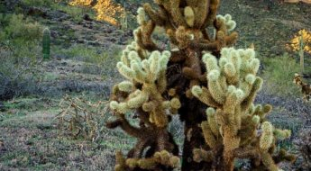 Using an aperture of f/20, everything is sharp from foreground to background.