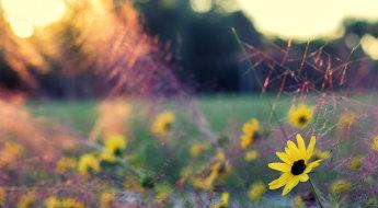 MF_Article_FlowerField