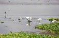 google maps birding paradise image