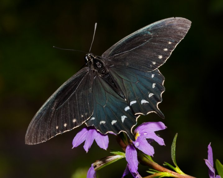 1_butterfly_with_flash